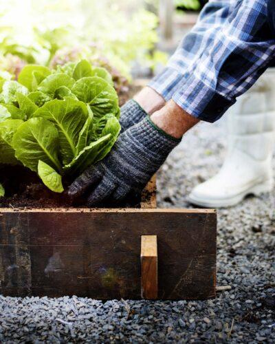 giardinaggio-e-agricoltura-mv-color